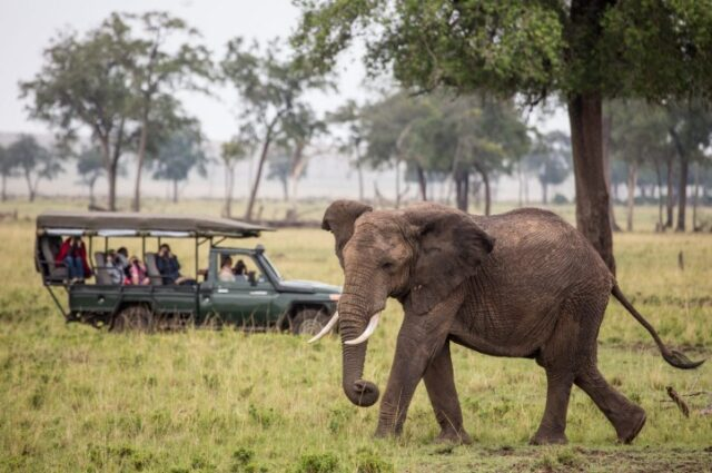 Kenya Crowned The Best Safari Destination 2019